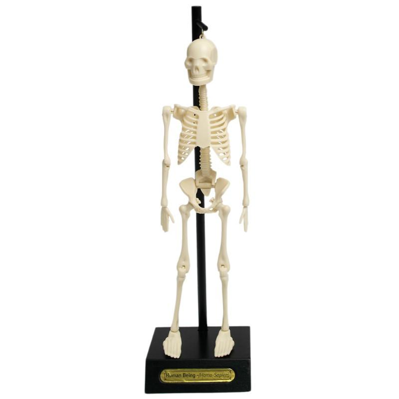 Squelette d'apprentissage